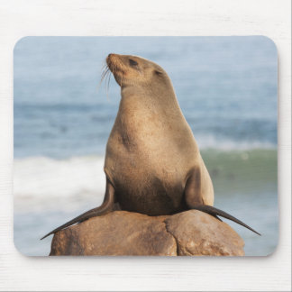 Cape Fur Seal resting on a rock Mouse Pad