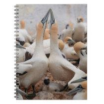 Cape Gannet pair fencing Notebook