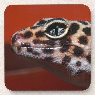 Cape Gecko (Pachydactylus Capensis) Profile Drink Coaster