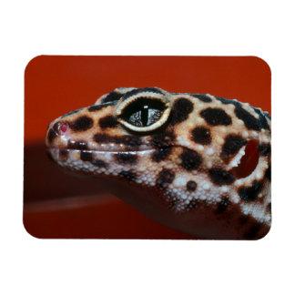 Cape Gecko (Pachydactylus Capensis) Profile Rectangular Photo Magnet