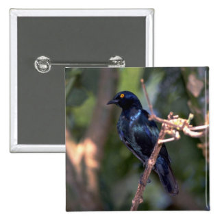 Cape Glossy Starling Pins