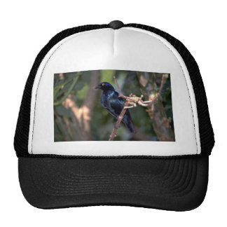 Cape Glossy Starling Trucker Hat