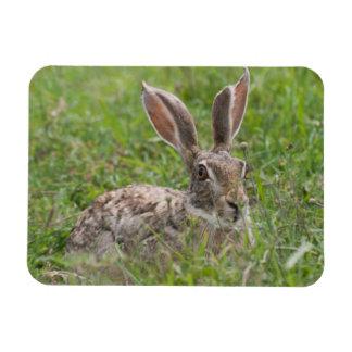 Cape Hare, Ngorongoro Conservation Area, Arusha Rectangular Photo Magnet