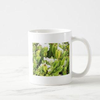 Cape Horn, Chile 1 Coffee Mugs