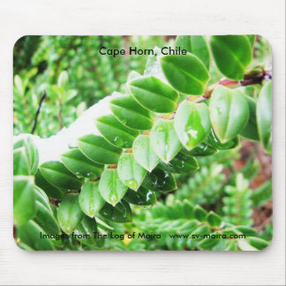 Cape Horn, Chile 5 Mouse Pad