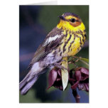 Cape May Warbler Bird Gifts Stationery Note Card