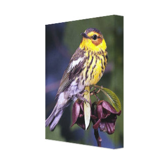 Cape May Warbler Bird Lovers Gifts Canvas Print