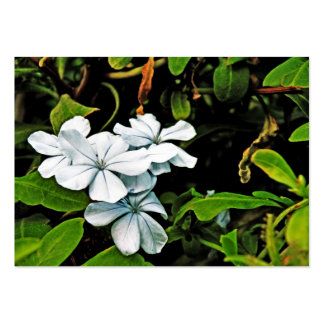 Cape plumbago business cards