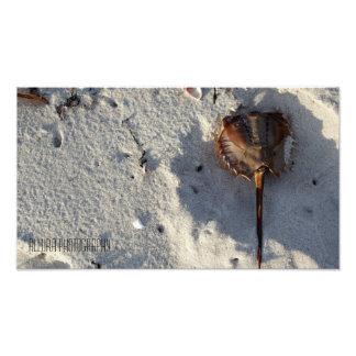 Cape Sand Photo Print