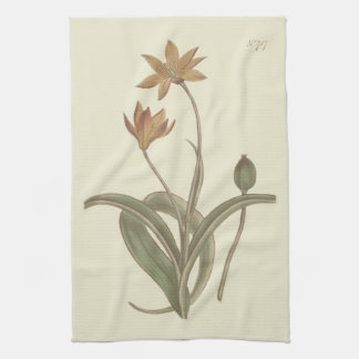 Cape Tulip Botanical Illustration Hand Towel