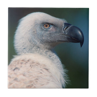 Cape Vulture (Gyps Coprotheres) Profile Small Square Tile