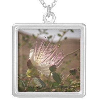 Caper flower Kapernblüte square Personalisierter Schmuck