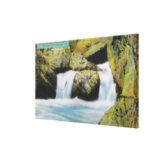 Capilano Canyon View of Salmon Leaping Upstream Canvas Print