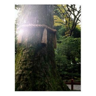 Capilla sagrada Japón de Hakone del árbol Postal