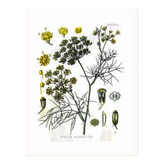 Capillaceum del Foeniculum (hinojo) Tarjeta Postal