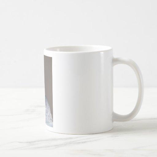 Capital Tazas De Café
