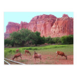 Capitol Reef National Park, UT Postcards
