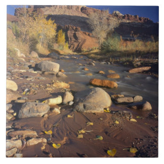 CAPITOL REEF NATIONAL PARK, UT, US, Cottonwood Ceramic Tile