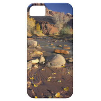 CAPITOL REEF NATIONAL PARK, UT, US, Cottonwood iPhone SE/5/5s Case