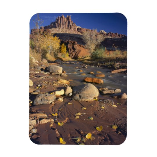 CAPITOL REEF NATIONAL PARK, UT, US, Cottonwood Magnet