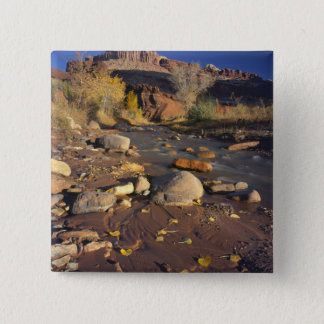 CAPITOL REEF NATIONAL PARK, UT, US, Cottonwood Pinback Button