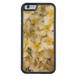 Capitol Reef National Park, Utah, USA 3 Carved Maple iPhone 6 Bumper Case