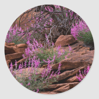 Capitol Reef National Park, Utah, USA Classic Round Sticker
