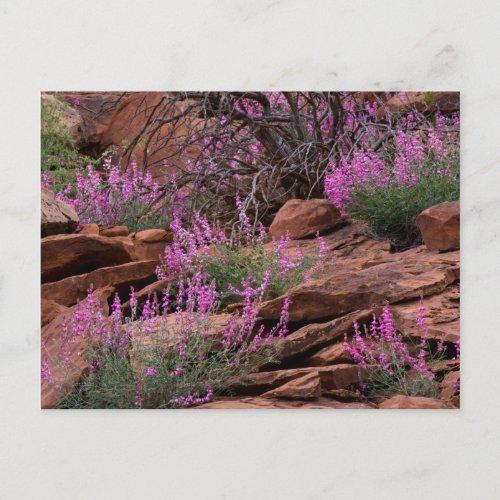 Capitol Reef National Park Utah USA Postcard