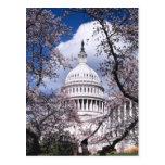 Capitolio de los E.E.U.U. con las flores de Postales