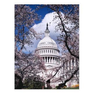 Capitolio de los E.E.U.U. con las flores de Postal