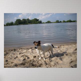 Capo de Oppenheim, Jack Russell Dog Poster