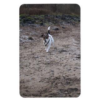 Capo von Oppenheim Jack Russell Terrier, Dog Magnet