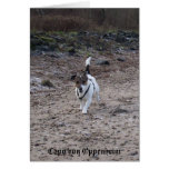 Capo von Oppenheim Jack Russell Terrier, perro Tarjeta De Felicitación