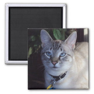 Cappuccino the cat 2 inch square magnet