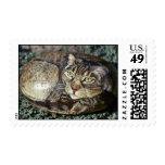 """""""Cappuchino"""" cat rock stamp"""