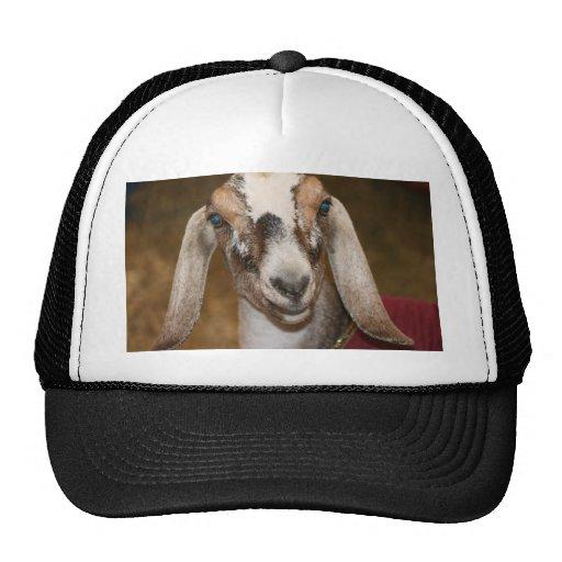 Caprine blanco de la raya de la gama de la cabra d gorras