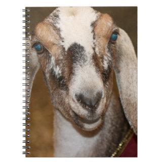 Caprine blanco de la raya de la gama de la cabra d libros de apuntes con espiral