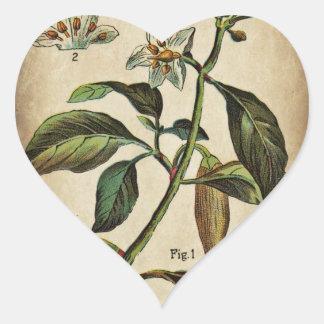 Capsicum Annuum Bell Pepper Heart Sticker