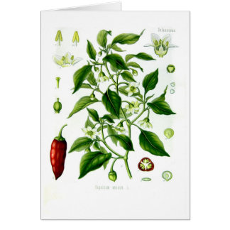 Capsicum annuum (cayenne pepper) cards