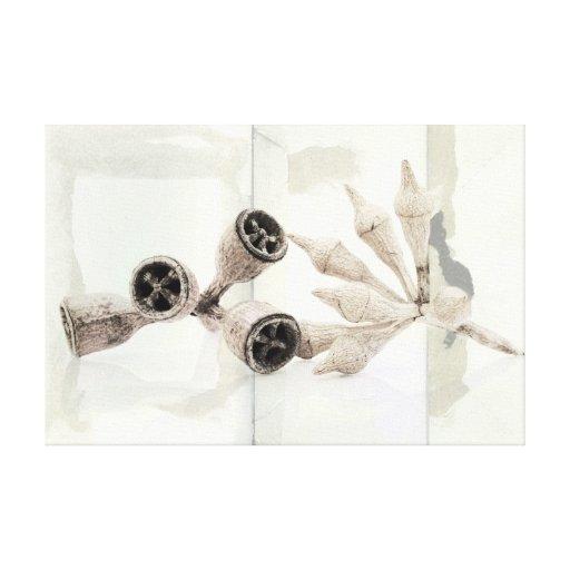 Cápsulas del eucalipto impresiones en lienzo estiradas