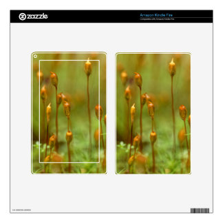 Capsules of common hair moss kindle fire skin