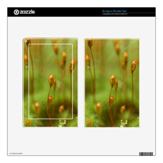 Capsules of common hair moss kindle fire skins