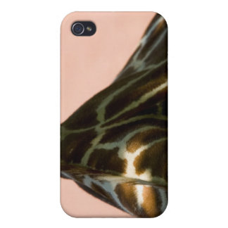 Captive animal iPhone 4/4S cover