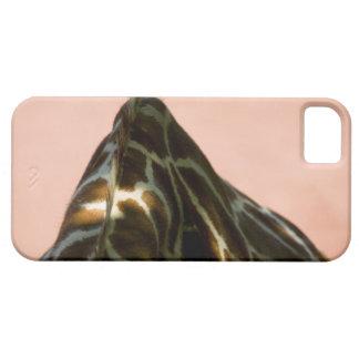 Captive animal iPhone SE/5/5s case