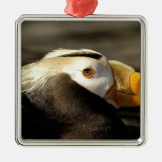 Captive Crested Puffin, Alaska Sealife Center, Metal Ornament