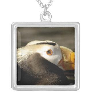 Captive Crested Puffin, Alaska Sealife Center, Necklaces