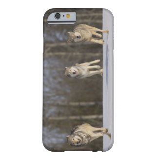 Captive, Duluth, Minnesota, USA 2 Barely There iPhone 6 Case