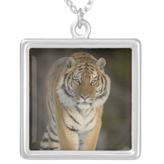 Captive, Duluth, Minnesota, USA Silver Plated Necklace
