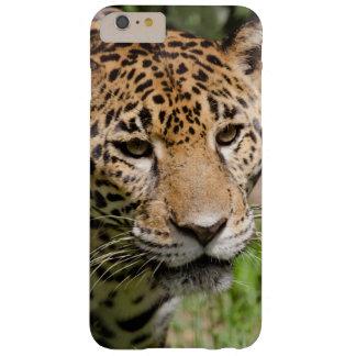 Captive jaguar in jungle enclosure 2 barely there iPhone 6 plus case