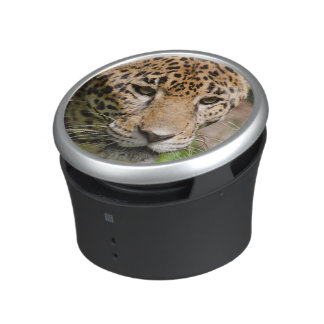 Captive jaguar in jungle enclosure 2 bluetooth speaker